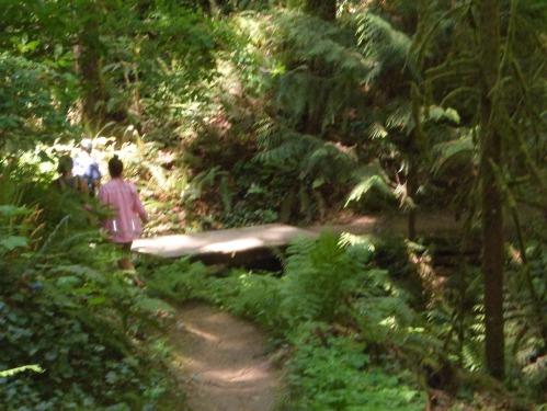 The descent back down Marquam Trail