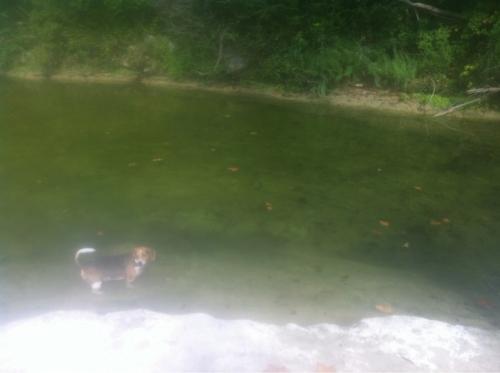 Bull Creek Biff 9_15_13
