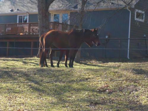 horse farm along the trail