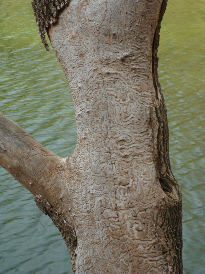 cool patterns on a tree that had its bark stripped away by the high waters