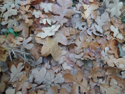leaves covering the trail