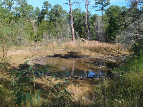 pond level on November hike