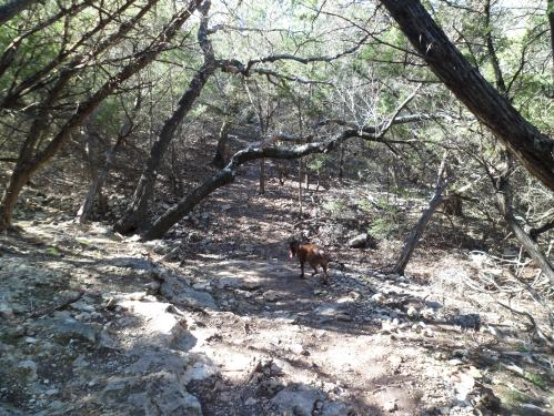 Sam on the rocky trail