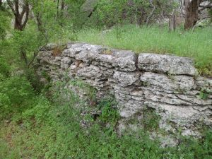 natural rock wall with ferns growing out of it