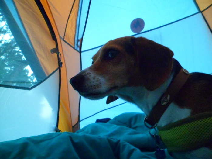 Biff in the tent at sunrise