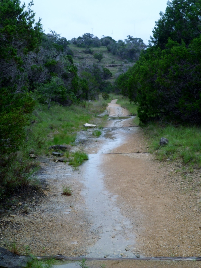 trail still wet from the rain