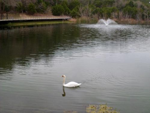 stop looking at me swan!