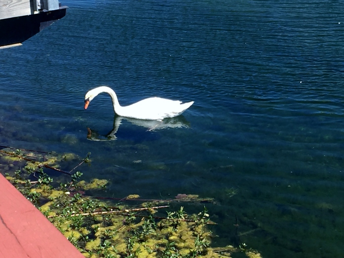 Security Swan