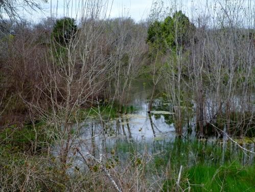 Marshy pond