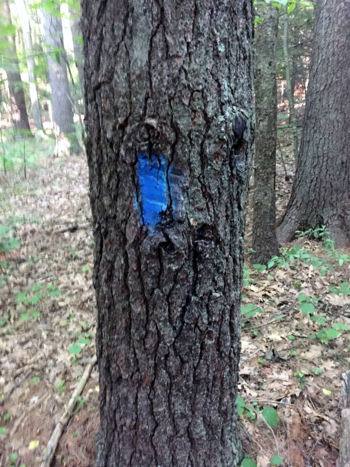 Blue blazes marked the trail