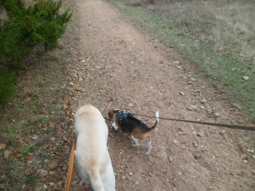 Dogs on trail!